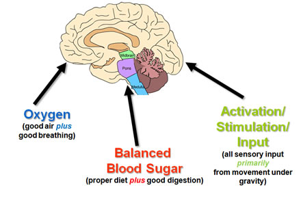 The Three Pillars of Brain Health